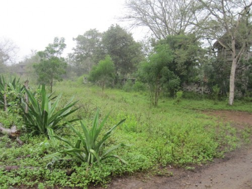 olon land for sale