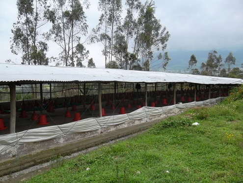 cotacachi-chicken-farm-for-sale